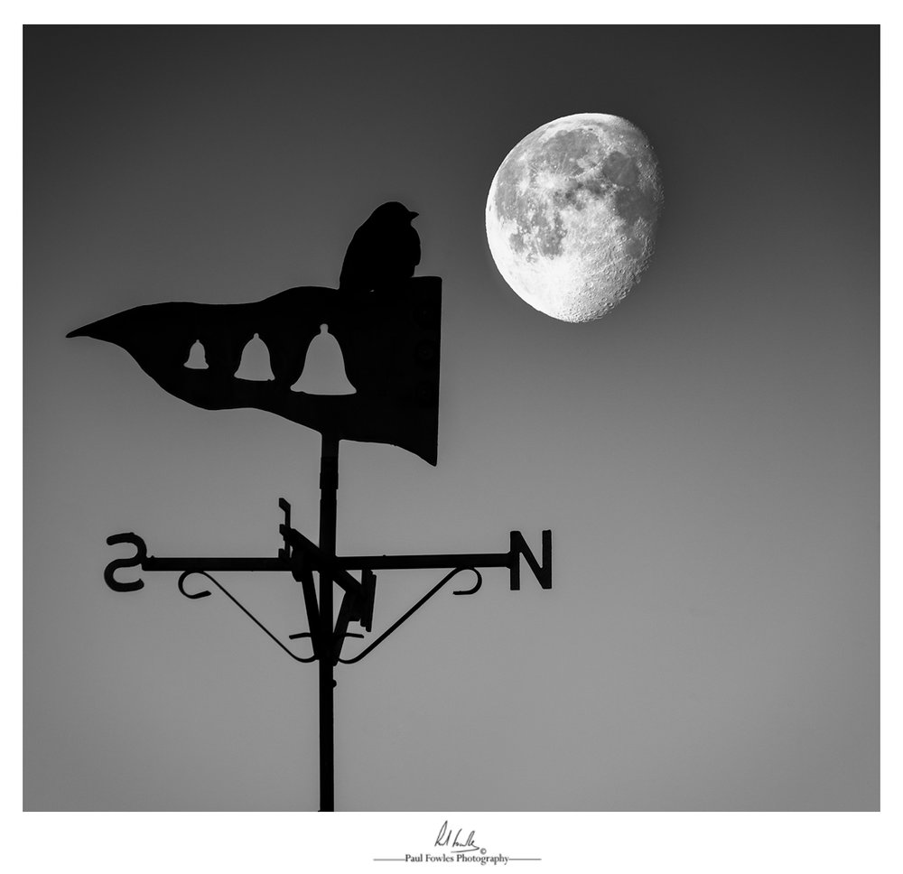 Moon Gazing - With a still and calm clear morning, my intention was to capture a moon set over Aberdyfi beach.  But, with clear sky's and nothing really to add to a good composition on the beach, I thought it would be a good idea to try and compose an image using the weather vane that's on the Aberdovey Yacht Clubs roof.  After a few minutes of taking photographs with the moon and weather vane at different angles to each other, a Jackdaw landed on the weather vane and decided to pose for a couple of shots!  'Moon Gazing' is made up of two images, the first with the Jackdaw in focus and the other with the moon in focus.  Taken at 600mm with a Sigma 150mm-600mm Sport Lens it was impossible to get both components sharp in a single image. Both images were then merged in Photoshop and then processed in Silver Effects Pro.