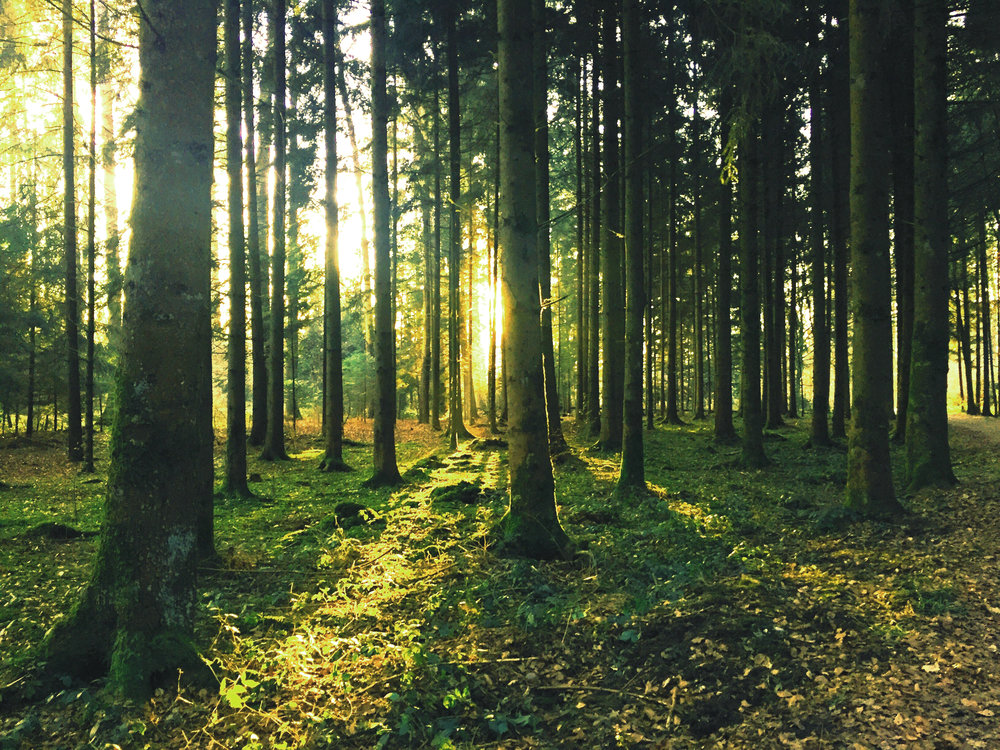 backlit-conifer-dawn-33020 green tint-low sat.jpg