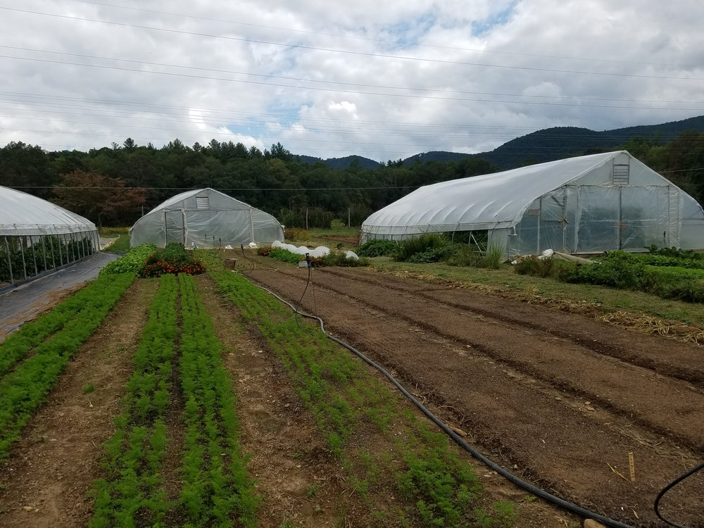 Goldfinch Gardens has had great success growing plants in their high tunnels from seed to start in their CSA garden.