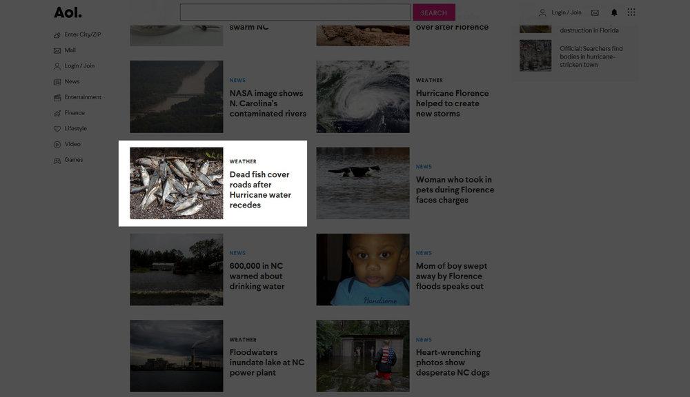 Dead fish (Aol.com)