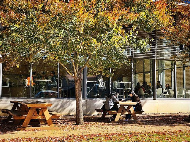 Perfect weather to dine #alfresco. 🍽🍁🍂#riceuniversity