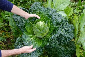 +fresco - Conheça quem faz a sua comida e receba em até 24h depois da colheita.