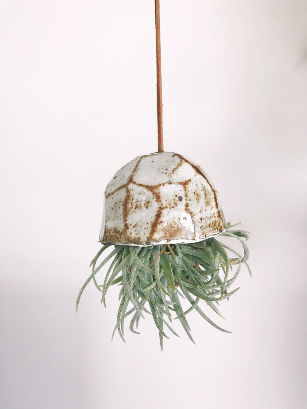 Air plant ceramic holder