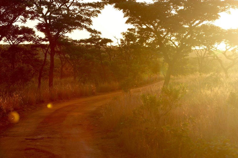 - South African Safari photo Board