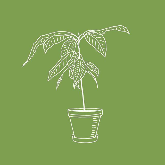 Botanical 1/3