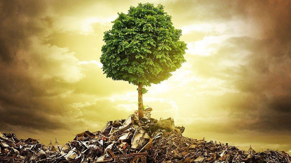 environmental-sustainability1.jpg
