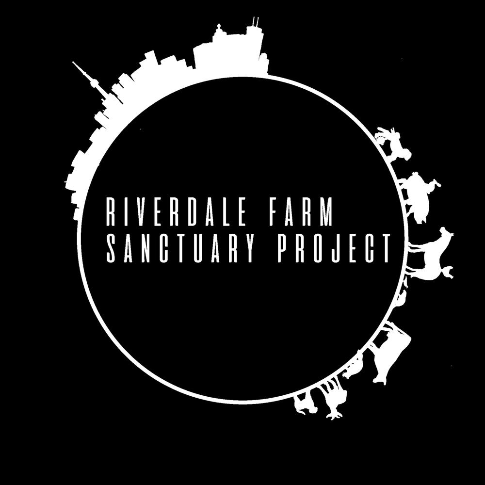 A Sanctuary in the Heart of Toronto - We are proud to announce our funding collaboration with the Riverdale Farm Sanctuary Project, a grassroots initiative set up to encourage the transformation of Riverdale Farm into an urban farm sanctuary, serving as a compassionate and sustainable model for the future of our communities. Riverdale Farm is currently a publicly-funded working farm and animal zoo in downtown Toronto which offers daily activities promoting animal farming. The vision of this project is to convert the farm into a sanctuary that assists in animal rescue, refuge, and advocacy, practices and promotes vegan ethics as well as sustainable urban plant-based agriculture. What a wonderful way to spread compassion and justice in the heart of the city!