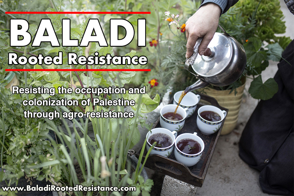 """Agro-Resistance in Palestine - """"Baladi – Rooted Resistance"""" is a series of stories about agro-resistance in Palestine created by an international team of photojournalists and a vegan writer and chef. With the help of our funding, the team will start producing the next series of stories, highlighting Palestinians resisting the occupation of their territories with seeds, wild foraged plants and homegrown vegetables, as well as Palestinians who believe food politics and food sovereignty intersect with the struggle for self-determination and freedom. The Arab word 'Baladi' is translated as 'local' and comes from 'balad' ('the country') and represents the connection with the land where the food was grown. The resistance is rooted because, for Palestinians, simply being there rooted to their own land, is already an act of resistance. The aim is to create a multi-media web project, combining photos, text and videos showcasing stories of hope, determination and resistance, and to produce a variety of content to draw attention to and gather support for agro-resistance projects in Palestine."""