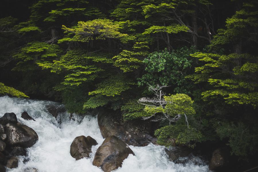 La Nikon D810 resalta el verde en las fotos de naturaleza