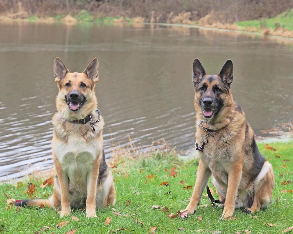 Schatzi and Ryken walk AAA .jpg