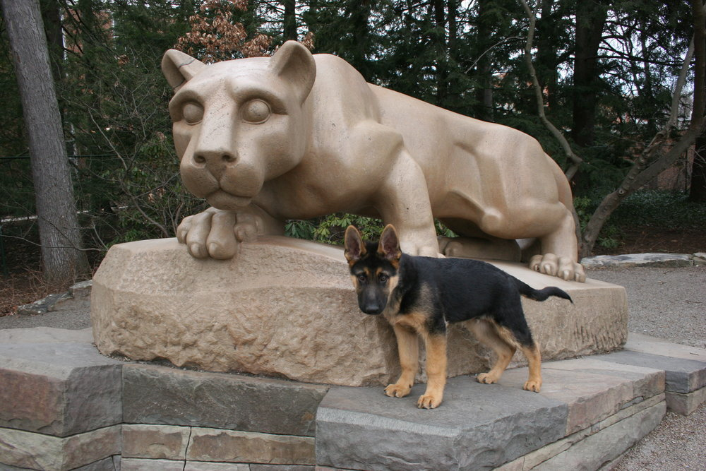 Blu with Nittany Lion B .jpg