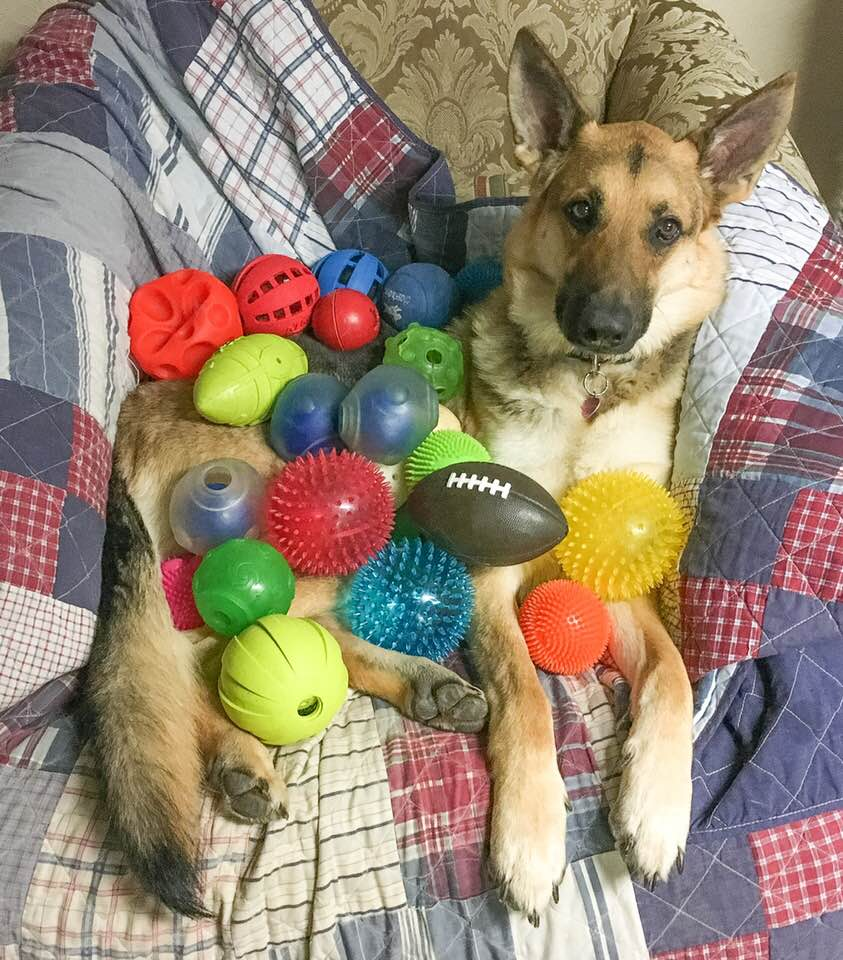 Schatzi and her ball collection .jpg