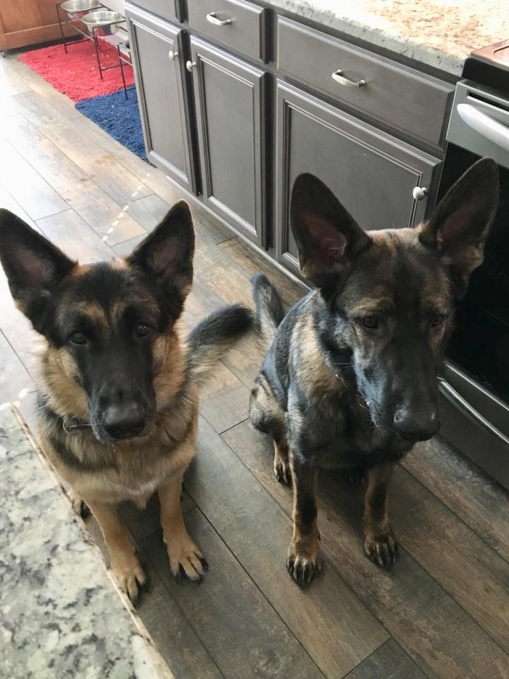 Waiting patiently for their treat .jpg