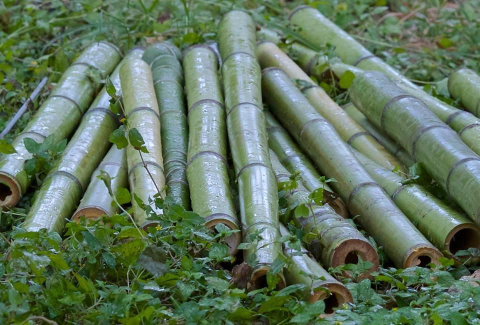 EarthTribe bamboo.jpg