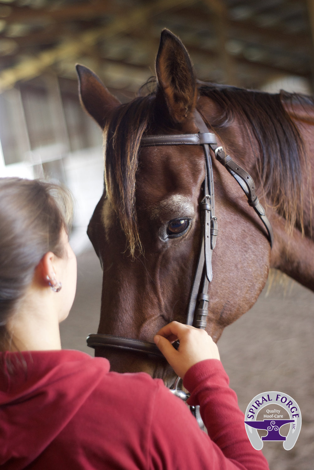- Jenny understands exactly how much a horse can mean to a person. She extends compassion to the animals she works on, while running an efficient and profitable business.