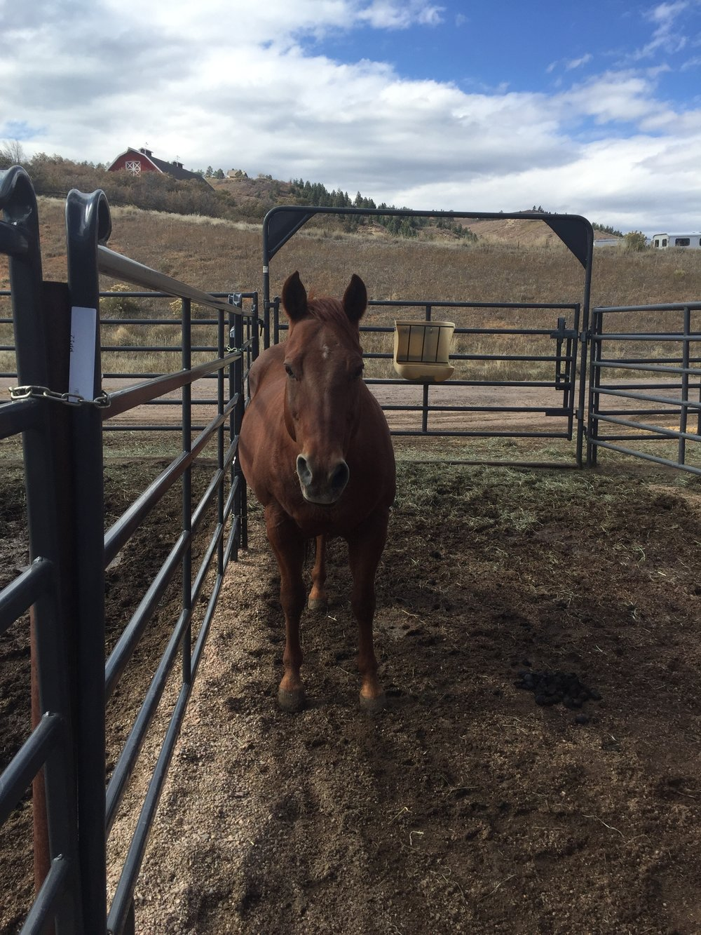 Bubba - Bubba is a 22 year old Quarter Horse. Back in his day, he was a champion cutting horse! Now he enjoys giving lessons, going on trail rides and occasionally chasing the flag.