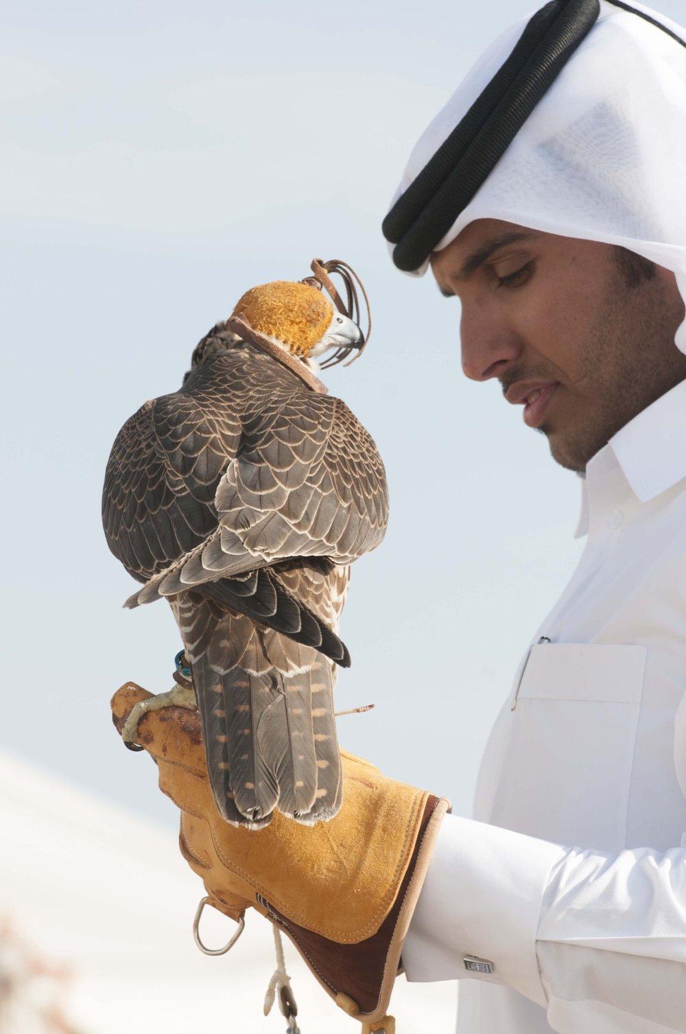 Falconry_-_a_popular_Qatari_sport.JPG