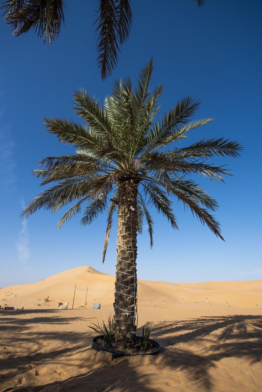 Abu Dhabi004.jpg