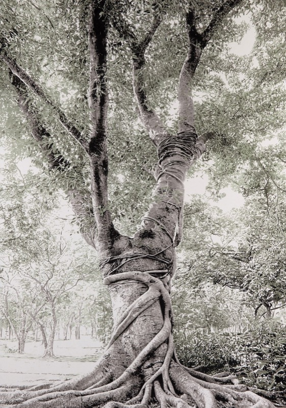 HR THE SODEN COLLECTION The Climbing Tree.jpg