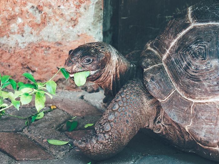 ZANZIBAR-Tortoise.jpg
