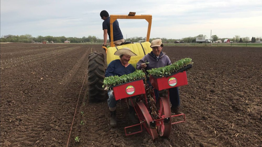20180508_Vang and Chao Tao Moua Transplanting Brussel Sprouts (003).jpg