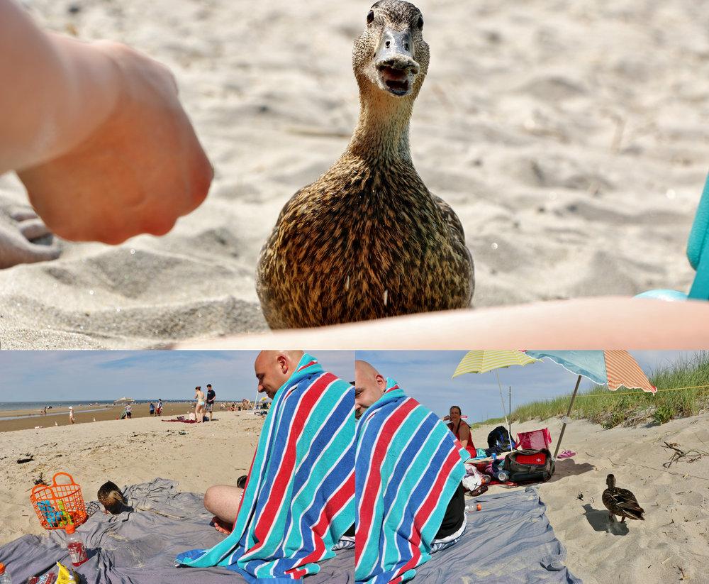 Hello, Humans!... Hi, Duck! June 2014