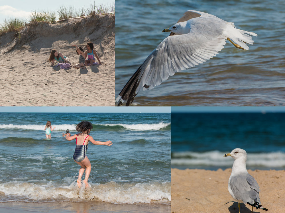 The Seagulls are jealous of all the fun we're having... August 7, 2015