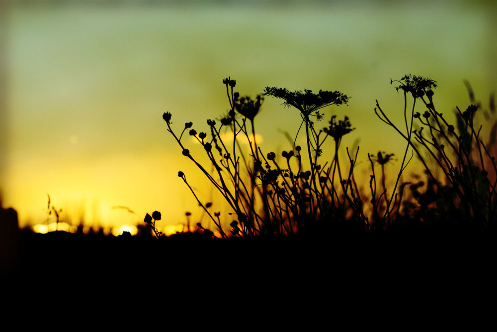 18_weed-silouette-burn_rgb_opt_web.jpg