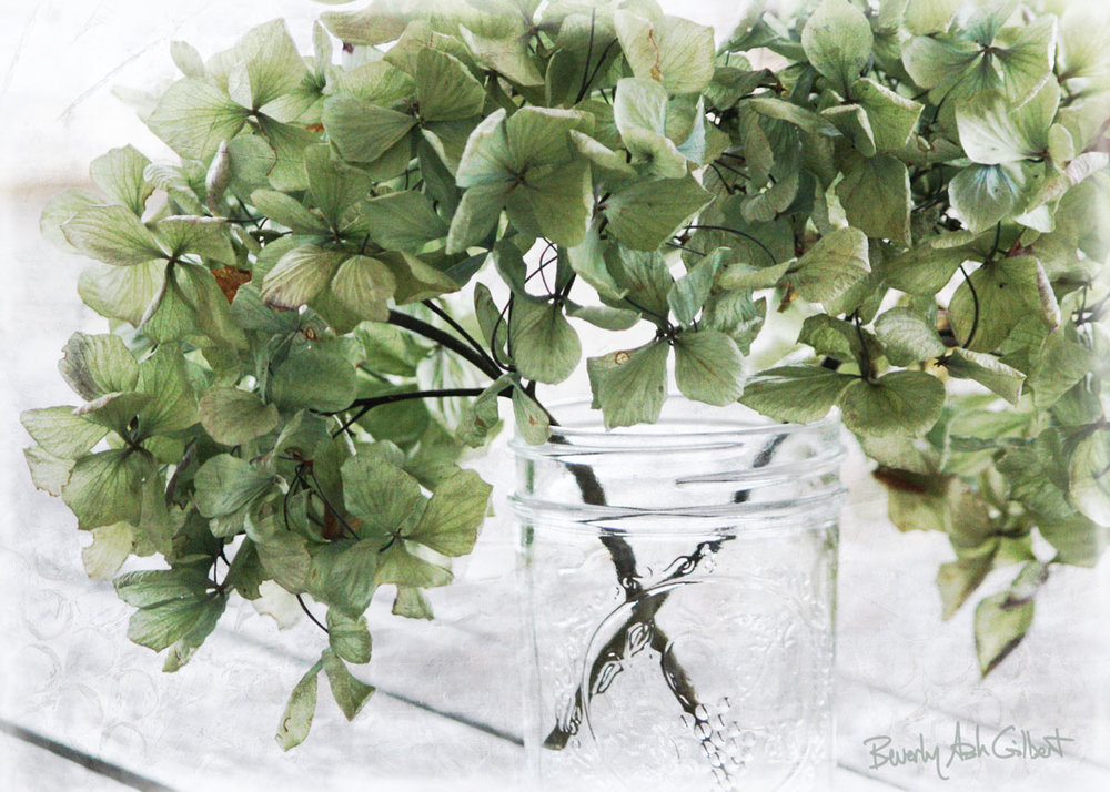 Hydrangea-green-in-jar_web.jpg