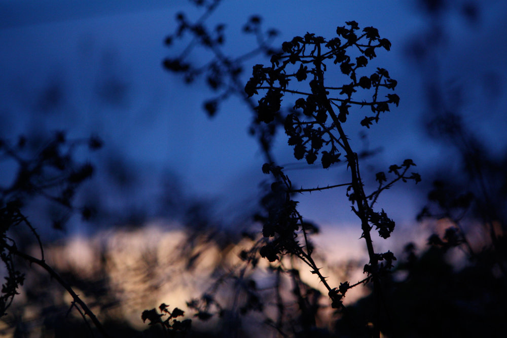 Cool-Blue-Evening-Light-Blackberry._web.jpg