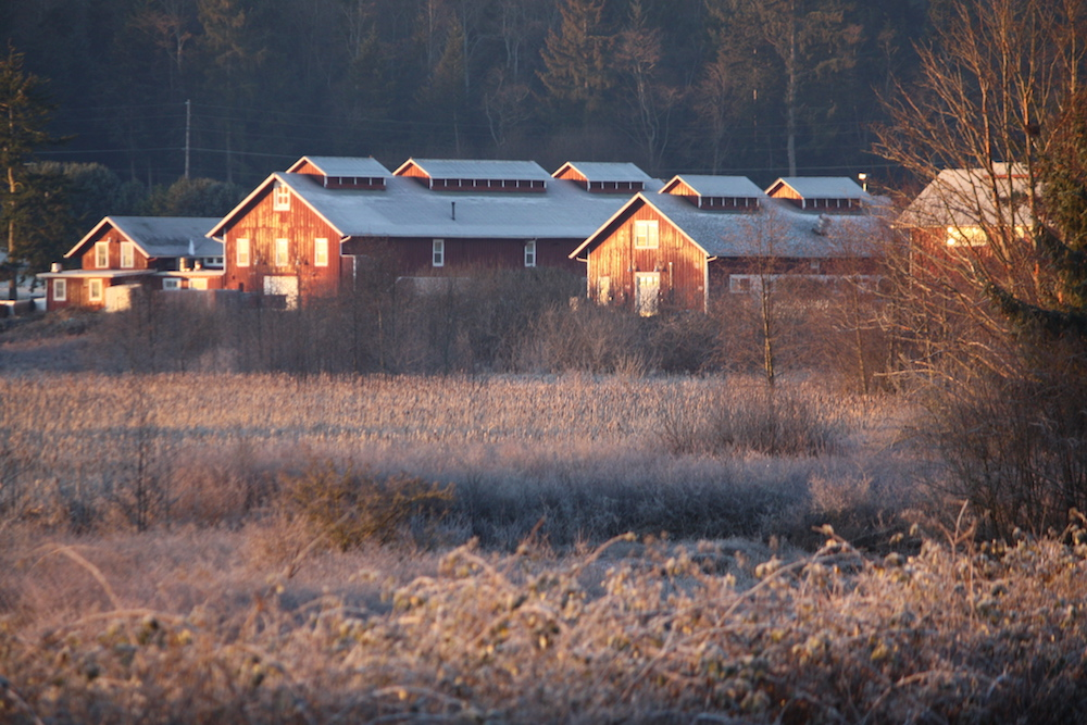 Barns in frost - Greenbank Farm web.jpeg