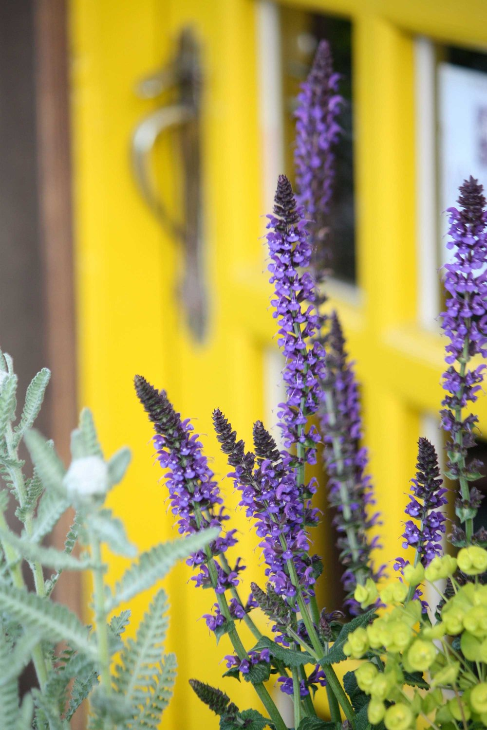 128_Purple-Lavender-and-Yellow-Door_rgb_opt_web.jpg