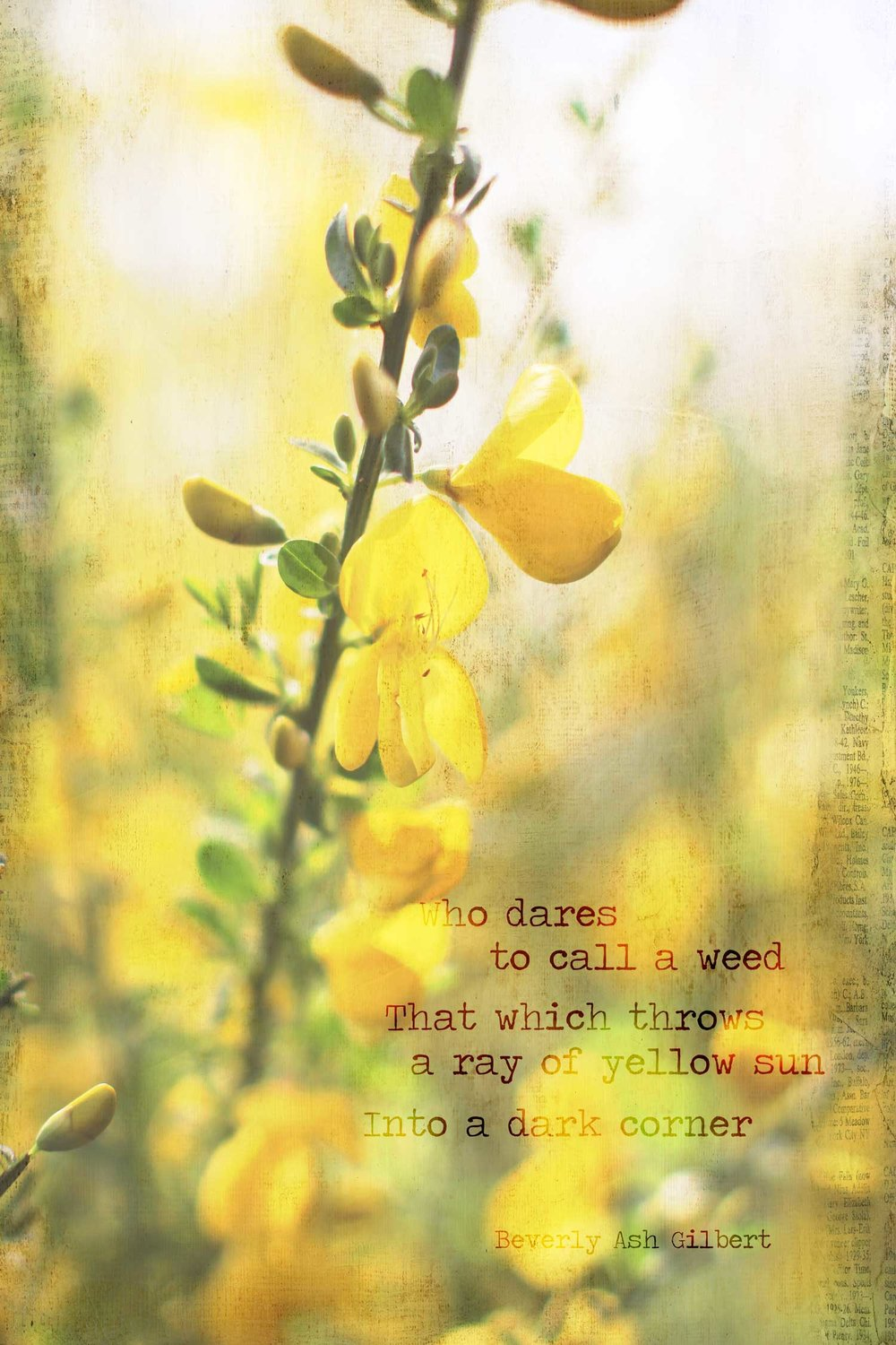 Positive_Inspiration_ScotchBroom_CallAWeed.jpg