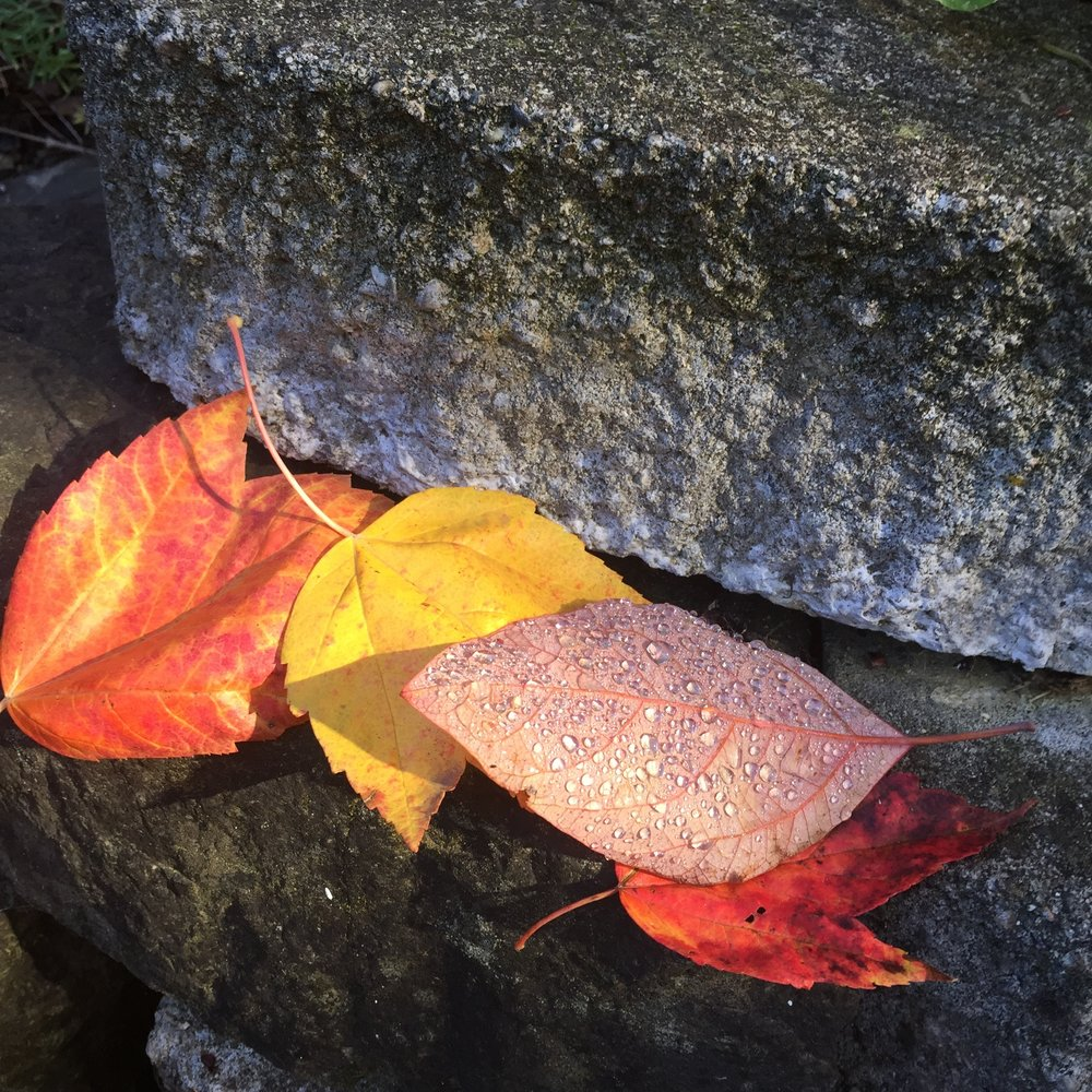 Autumn leaves on a rock wall