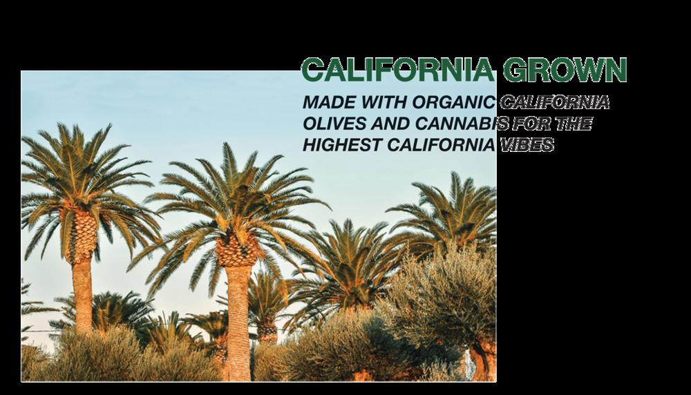 california-grown-vireo.png