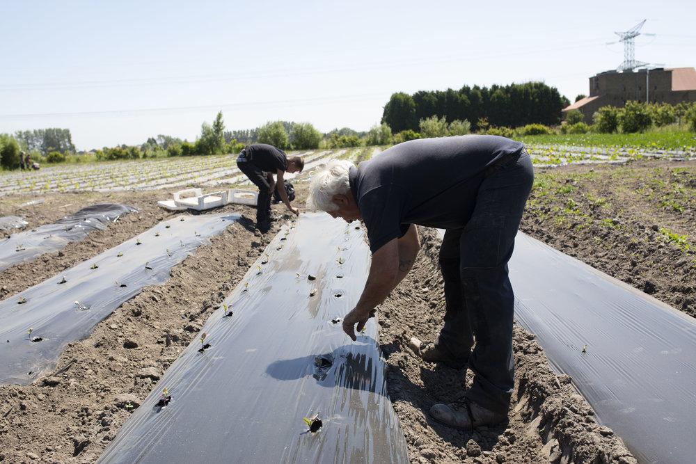 Un accompagnateur socio-professionnel (droite)et un Jardiniers Cocagne (gauche) au Jardin de Cocagne Les Anges Gardins © 2018 Jean-Philippe Berger