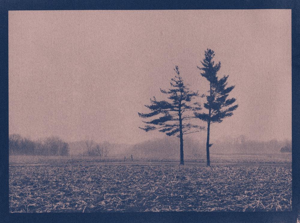 Cyanotype - gallery
