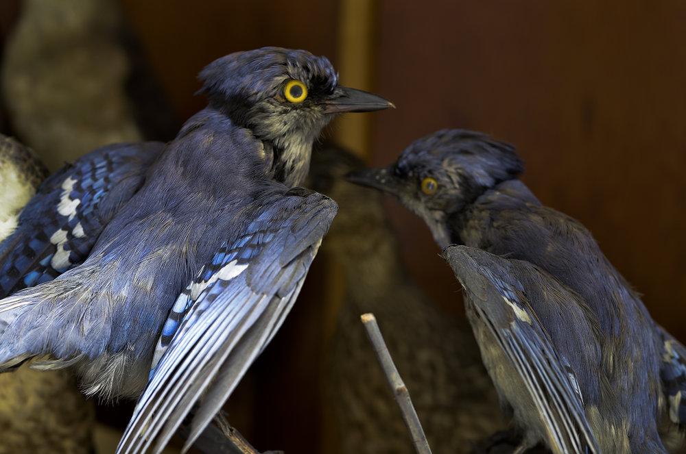 birds012114 (1).jpg
