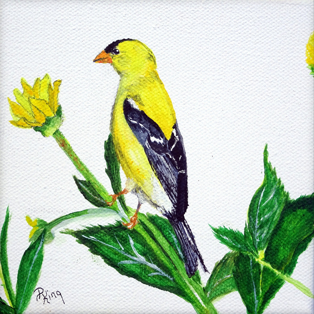 """""""AMERICAN GOLD FINCH"""",  Acrylic on Wrapped Canvas,  5x5x1.25 inches,  $75"""
