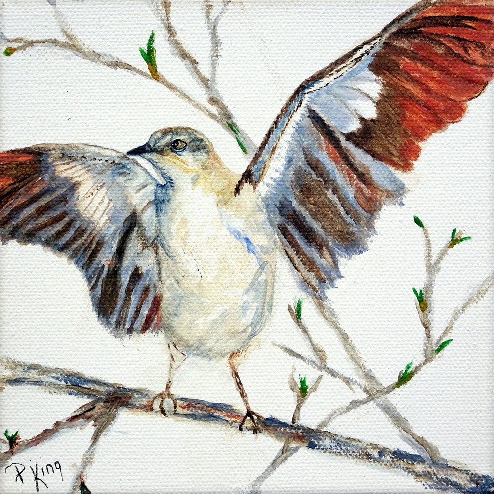 """""""NORTHERN MOCKINGBIRD"""",  Watercolor, Wrapped Canvas, 6x6x1.5 inches,  $75"""
