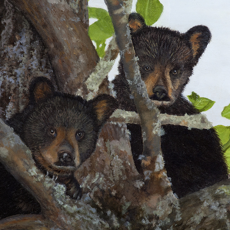 Painting of Appalachian Wildlife - Bear Cubs