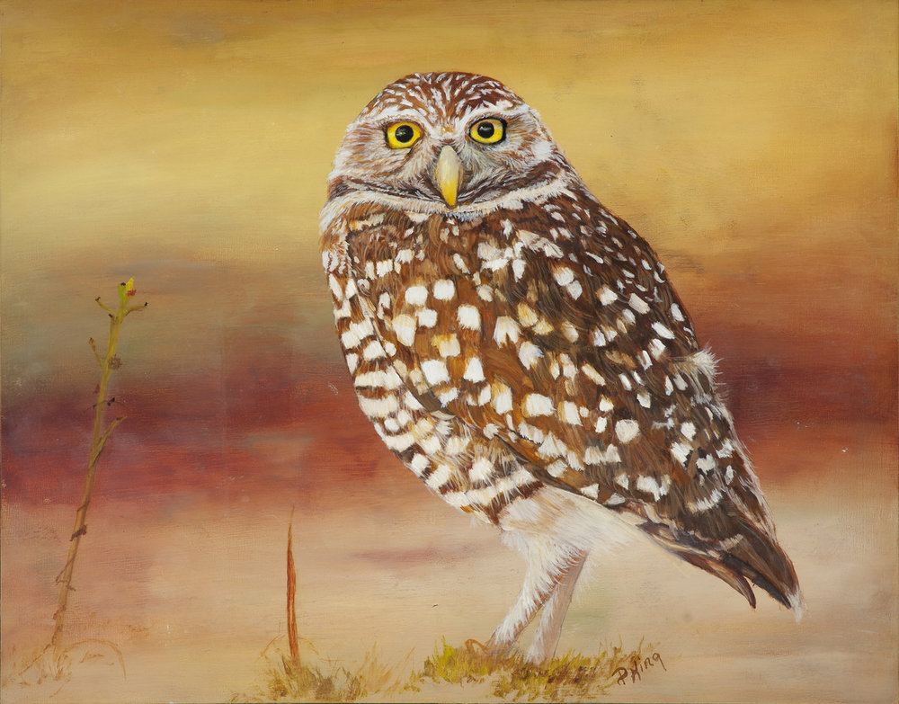 """""""BURROWING OWL"""",  Oil on Canvas Board,  11x14 inches,  $375"""
