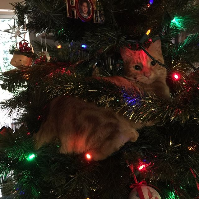 (From three years ago.) The tree was missing something... oh yeah, a kitten. #catsofinstagram #cat