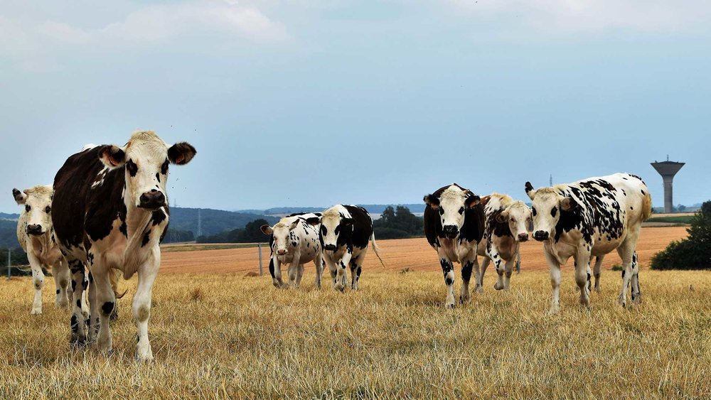 'There-Are-Cows-in-That-Field'-Announces-Girlfriend-During-Road-Trip.jpg
