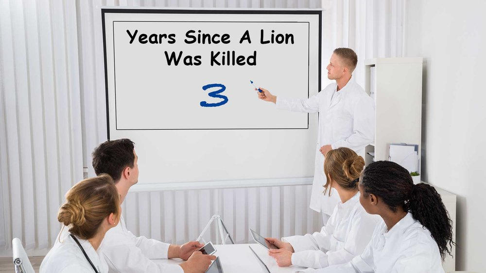 Minnesota-Dentists-Celebrate-0-Lion-Killing-Incidents-For-Third-Year-In-Row.jpg
