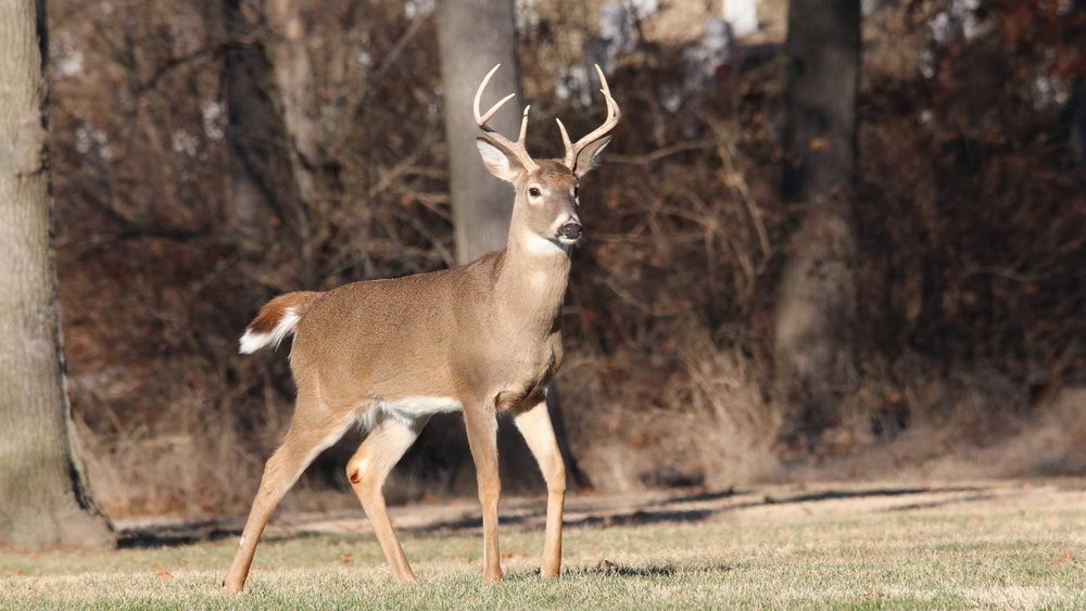 Mom-of-6-point-buck-thinks-hes-a-10.jpg