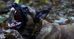 Dog_experts_3.jpg