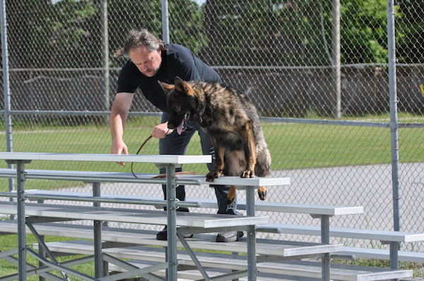 Elite dogs for personal protection and explosives detection.   EVIDENCE BASED   Detection K9's
