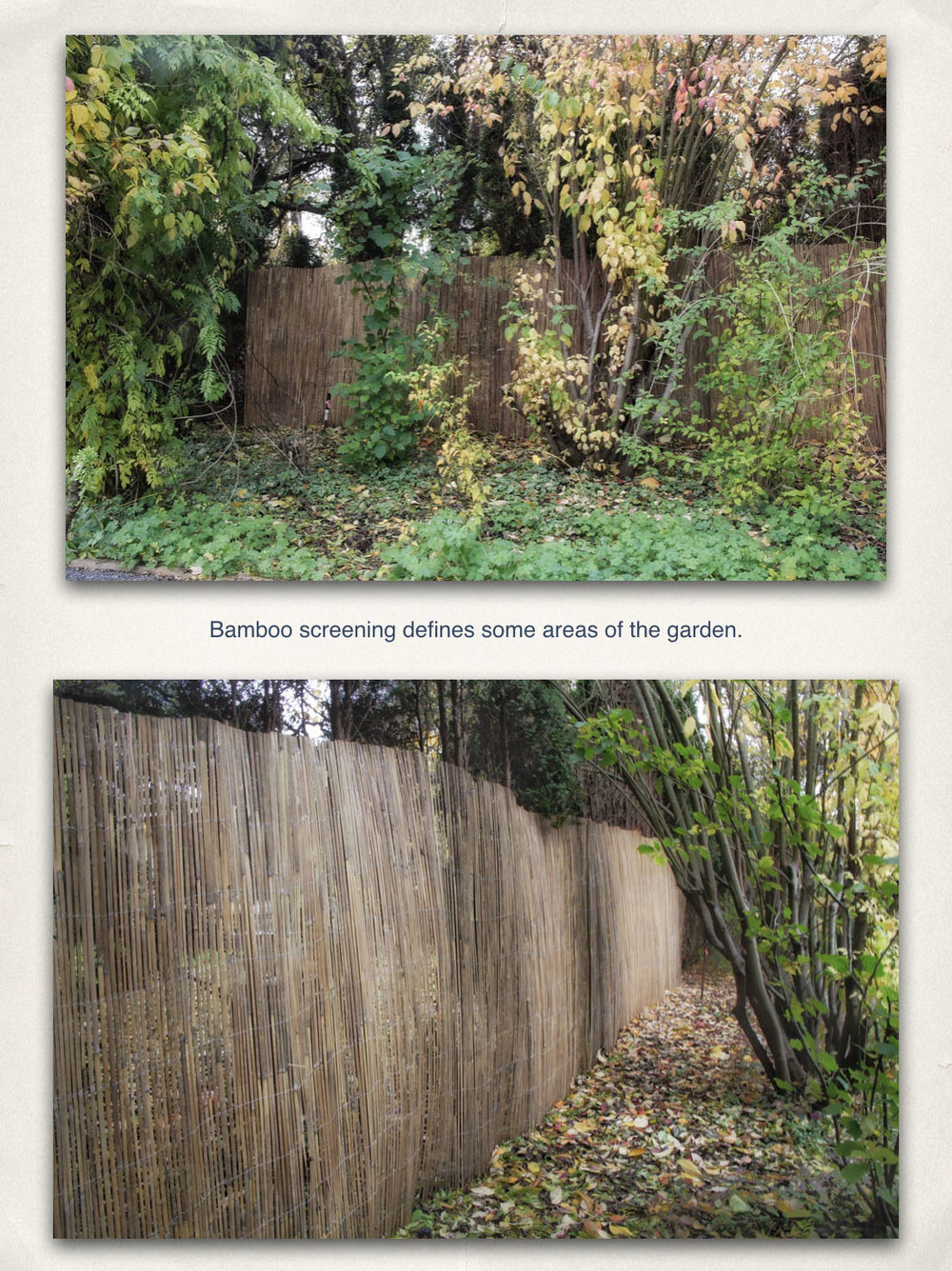 11 - Bamboo Screening.jpg