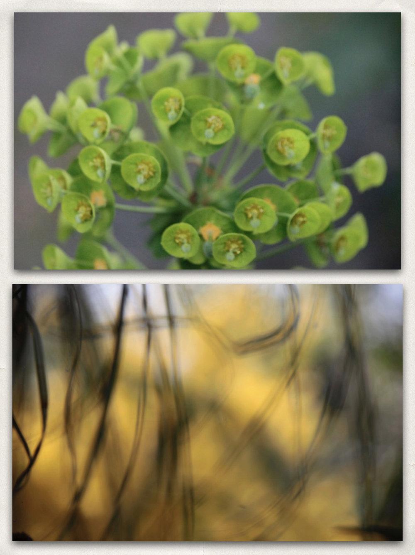 22 - Plants-a.jpg